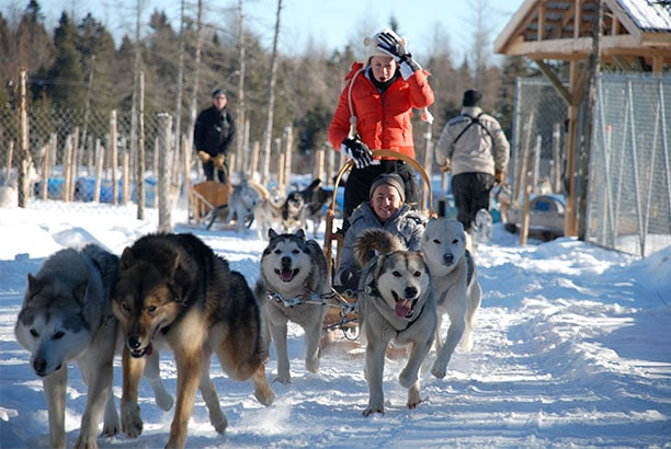 chien-de-traineau-dog-sleeding-quebec