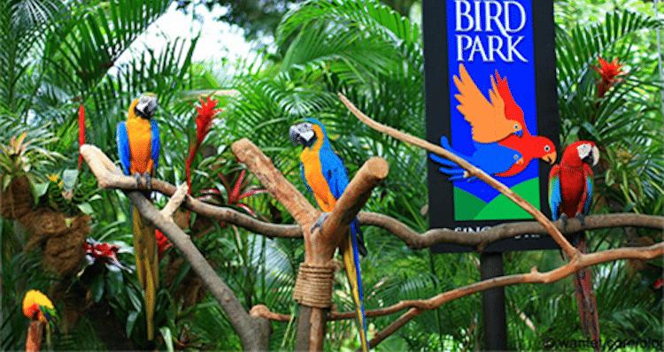 oiseaux bali