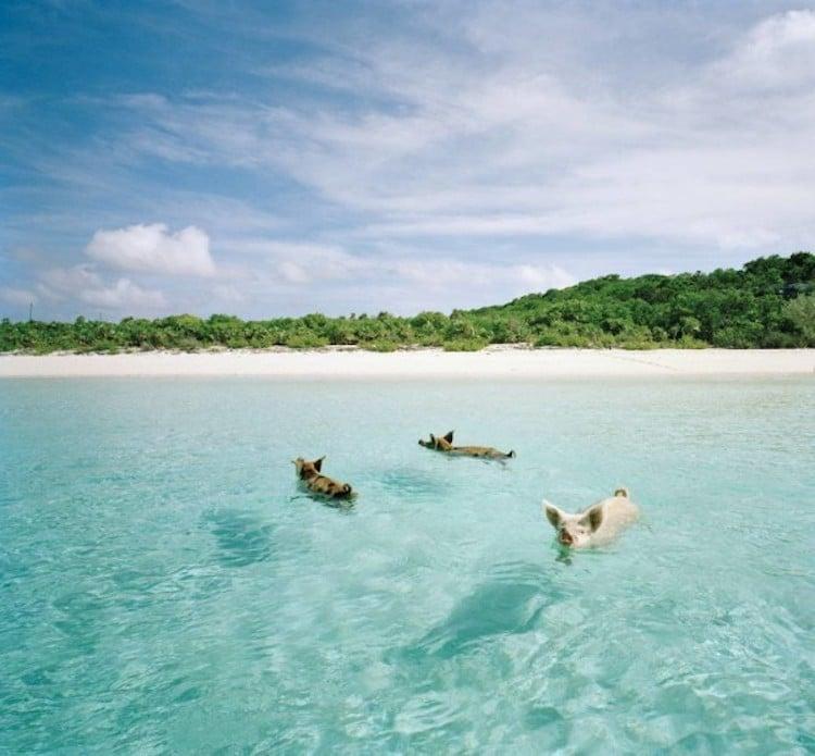 Pig Major Cay