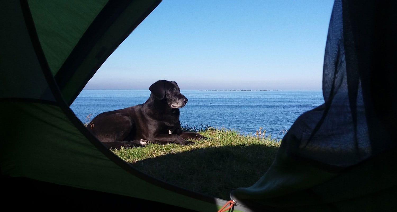 Mon chien au réveil en Turquie