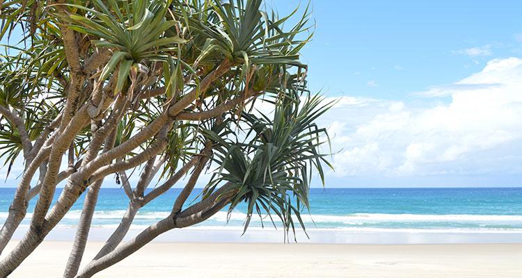 les plages de surfers paradise