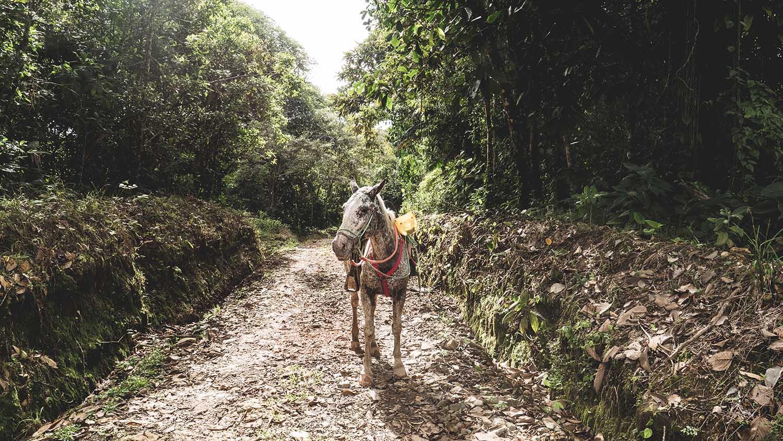 Rios tropicales pour les balades en cheval au Costa Rica
