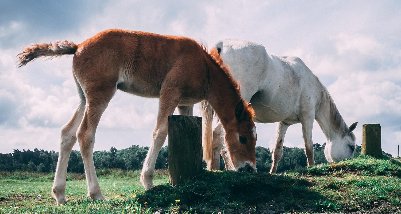 New age Forest en Angleterre est l'un des lieux les plus fous que j'ai pu visiter : 3000 chevaux se baladent librement